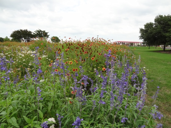 Allen Wildflower Field_1