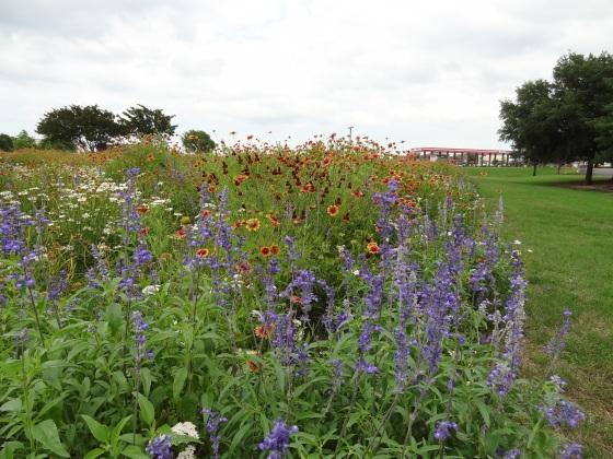 Allen Wildflower Field_1