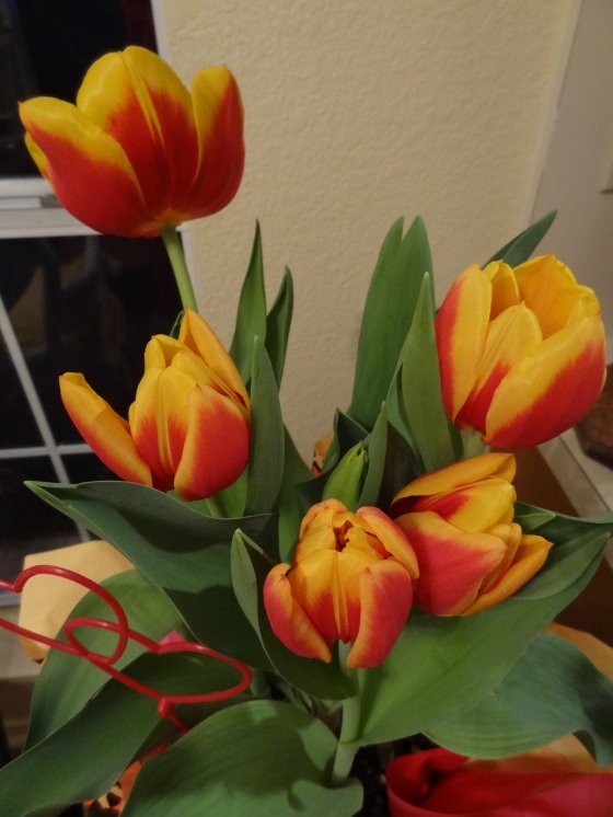 Four tulips about to open.