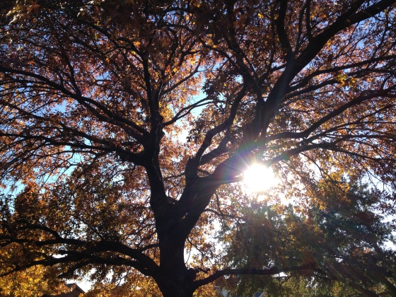 Afternoon sun captured behind an oak tree.