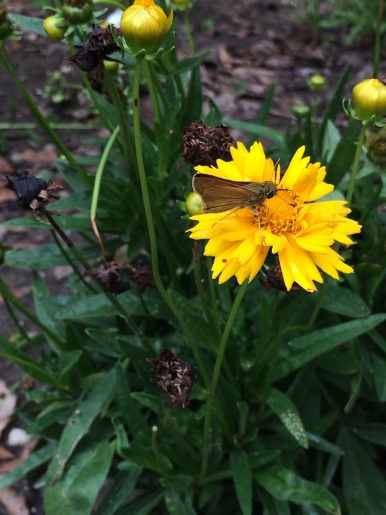 YellowFlowerButterfly