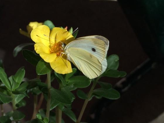 AugustButterfly